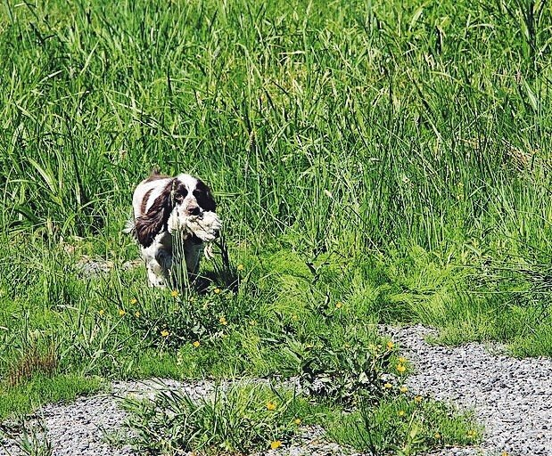 Смотр перспективных собак