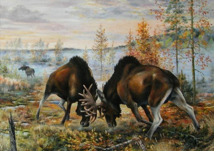 В Кировской области завершен сезон охоты на самцов лося в период гона