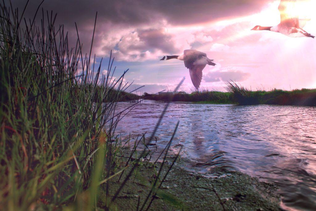 Один день на болоте