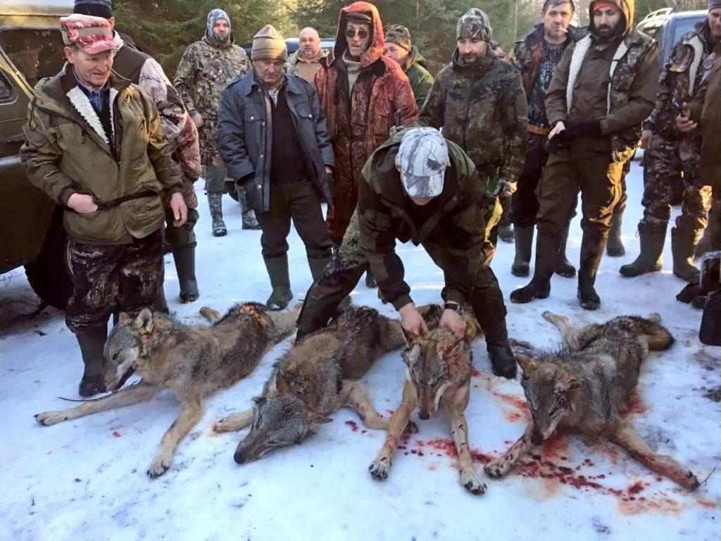 Идёт охота на волков