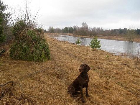 Зря не верили: Тверская область опубликовала постановление о закрытии весенней охоты в 2020 году