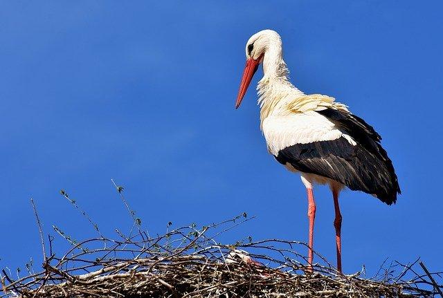 Основные принципы использования ресурсов мигрирующих и гнездящихся водоплавающих птиц на территории Беларуси