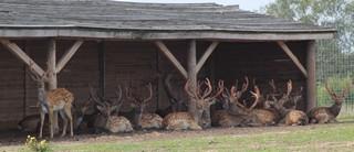 Приглашаем в ЦДУ. Тема доклада:  «Разведение копытных в питомниках и нужды охотничьего хозяйства»