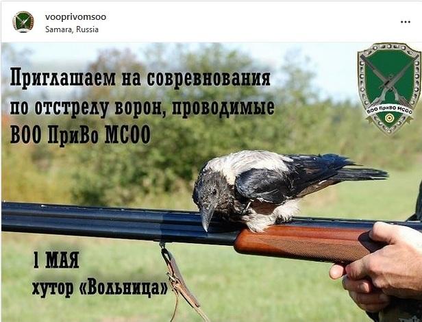 Соревнования по отстрелу ворон