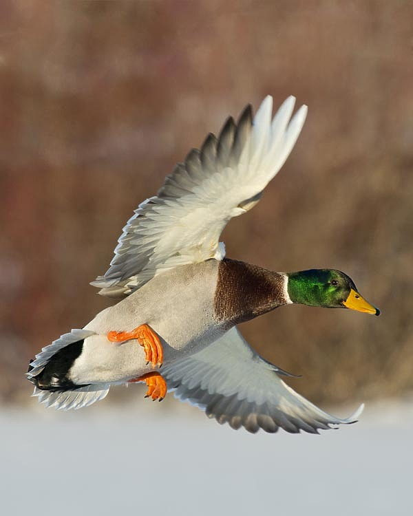 Мысли о весенней охоте