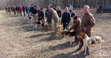 Состоялась выставка собак гончих пород