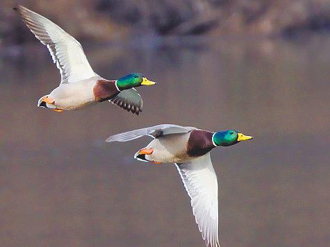 Замороженная охота: весна-2021