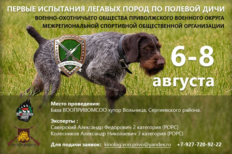 В Самарской области с 6 по 8 августа пройдут испытания легавых по полевой дичи